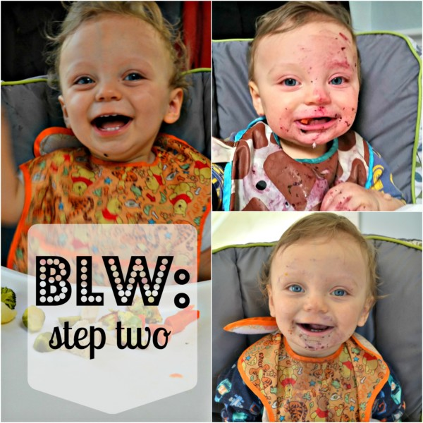 BLW Stage 2