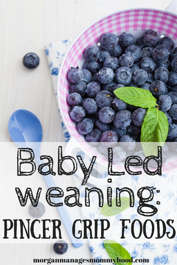 "a bowl of fresh blueberries in a bowl with pint on top with the words ""baby led weaning pincer grip foods"" over layed"