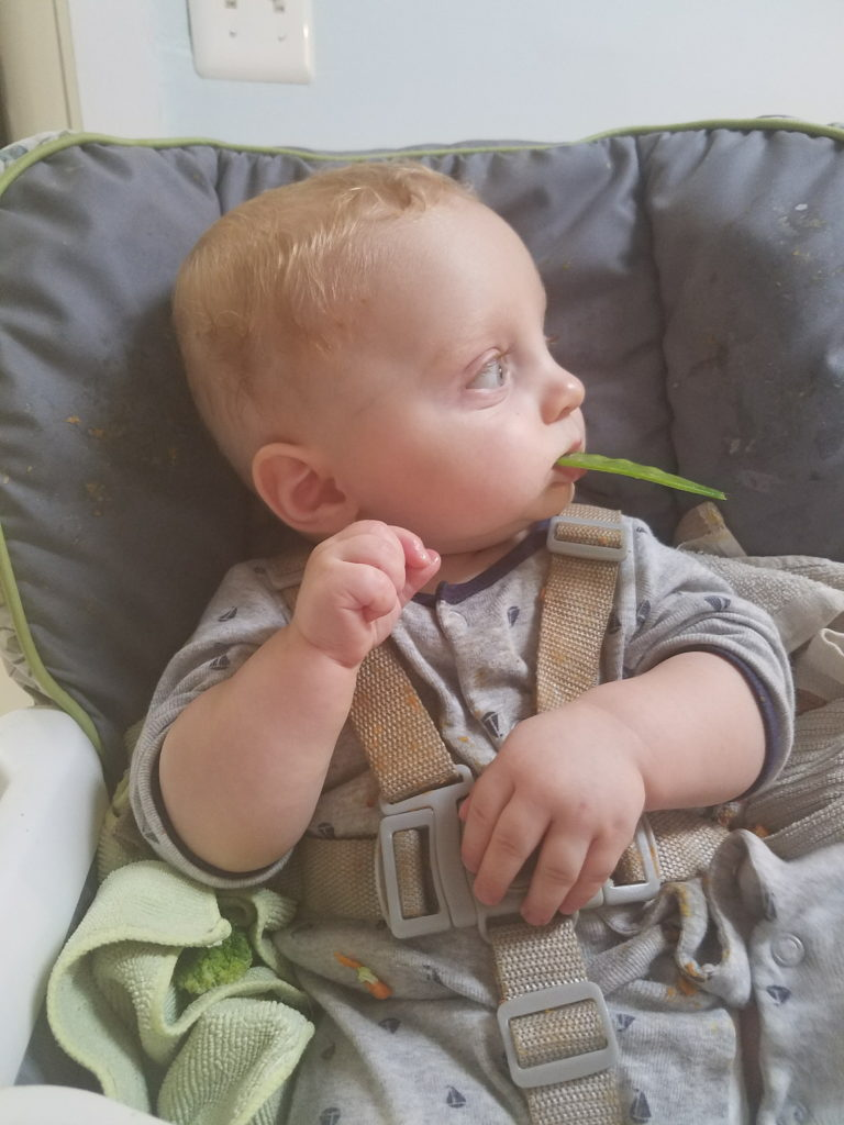 a baby eating a snap pea using the baby led weaning method